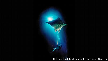 A still from the film Racing Extinction showing a diver swimming beneath a sting ray