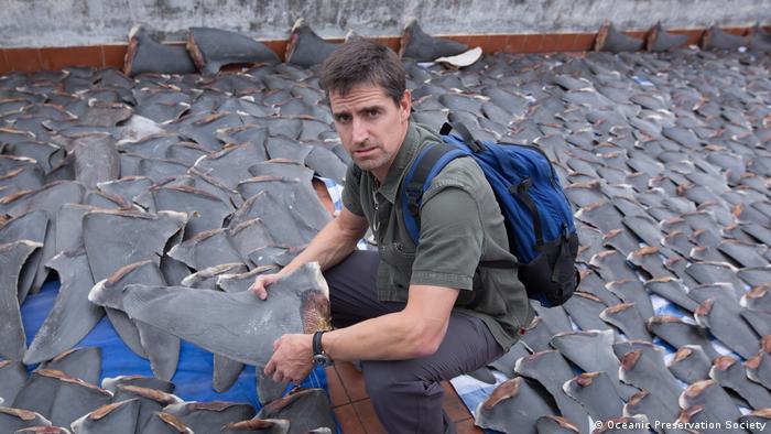 Un hombre sostiene la aleta de un tiburón, entre miles de ellas.