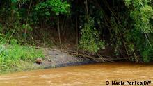 Umweltbelastung Wer hat das Bild gemacht?: Nádia Pontes Wann wurde das Bild gemacht?: 01.11.2020 Wo wurde das Bild aufgenommen?: Barra Longa, Minas Gerais (Brasilien) Bildbeschreibung: Capybara am Ufer des Carmo Fluss, vom Schlamm getroffen