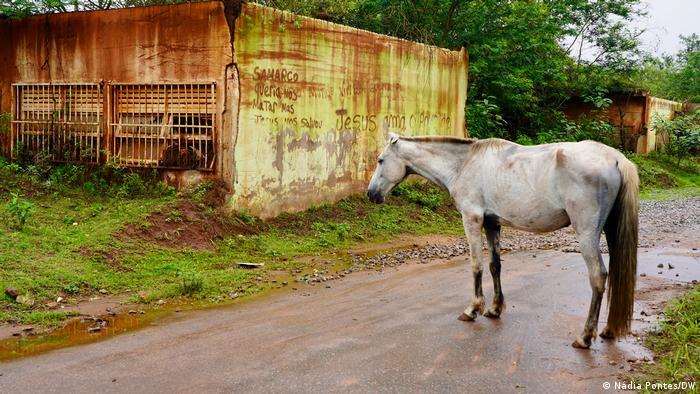 Brasilien Minas Gerais   5 Jahre nach Bergbaukatastrophe (Nádia Pontes/DW)