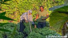Bangladeshi farmer Shahjahan Bhuiyan Teaser: Bangladeshi farmer Sahjahan Bhuiyan produces Bangladeshi vegetables in Offenbach, Germany Keywords: Shahjahan Bhuiyan, Bangladeshi German, vegetables, offenbach