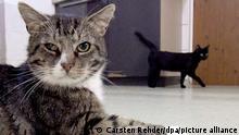 Catcalling | Katzen