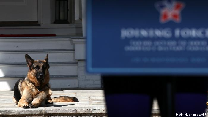 USA Joe Biden Hund Champ