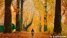 Picture Gallery, 'Autumn in Kashmir', Indian Administration Kashmir.