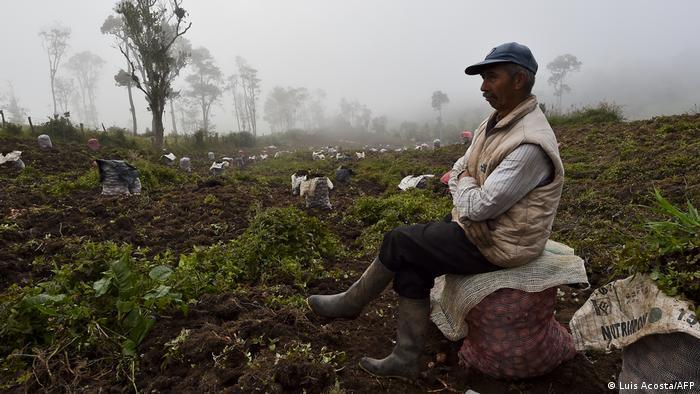 La violencia en Colombia sigue expulsando a su gente, sobre todo en regiones disputadas por cultivos ilegales.