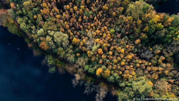Aerial view of autumnal colored trees at the Hengsteysee lake in Hagen, western Germany