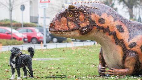 """Pas po imenu Pele pomalo je zbunjen zbog karnotaurusa koji se odmara na platou ispred Pokrajinskog muzeja u Hanoveru. Nekoliko modela dinosaurusa u prirodnoj veličini najavljuje izložbu """"KinoSaurier"""" koja će se održati od 4. decembra, do 25. maja sledeće godine."""