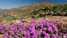 Flowers and mountain scene in South Africa