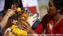 Nepal Lalitpur | Hundefest