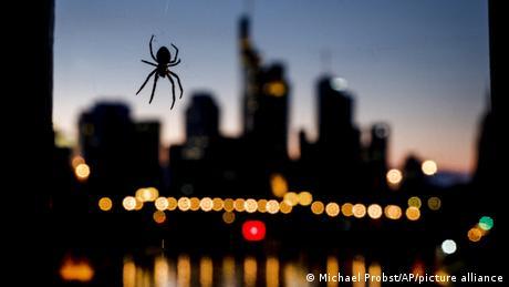 Iza u sumraku titra frankfurtski Siti, niz oblakodera u kojima su smeštene divovske banke zbog čega Frankfurt na Majni na pokojoj fotografiji liči na London ili Njujork. Dok Njujork ima spajdermena, u Frankfurtu su samo obični pauci od kojih jedan visi sa železničkog mosta kao da pozira fotoreporteru.