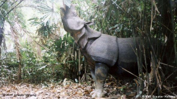 Javan rhinos in Indonesia's Ujong Kulon National Park