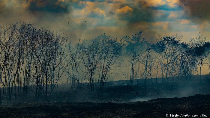 Fileira de árvores carbonizadas
