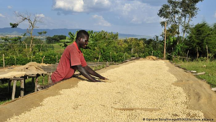 Ethiopian man dries cofffee beans | Jimma