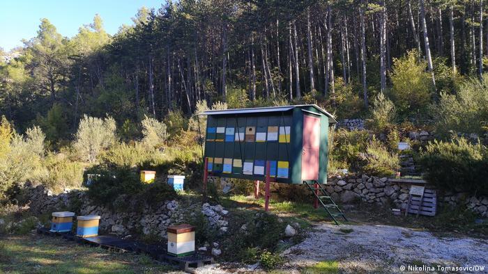 Košnice u Dalmaciji