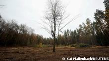 A demonstrator sits in a lone tree, with cut down trees in the background, in a protest against the extension of the A49 motorway, in a forest near Stadtallendorf, Germany November 17, 2020. REUTERS/Kai Pfaffenbach