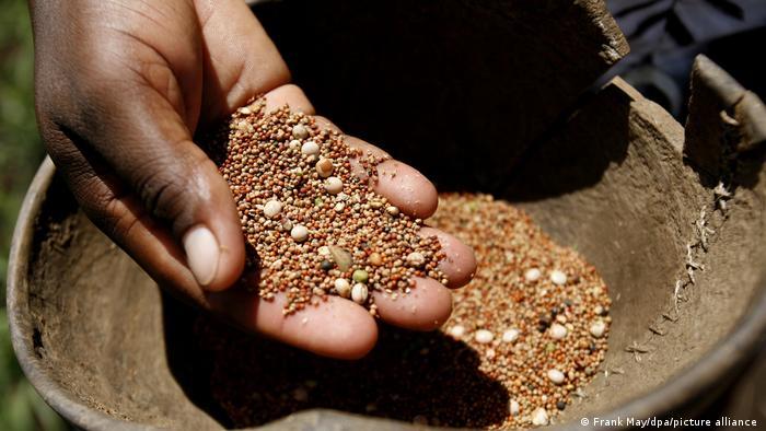 Semillas: símbolo de la lucha contra el hambre.