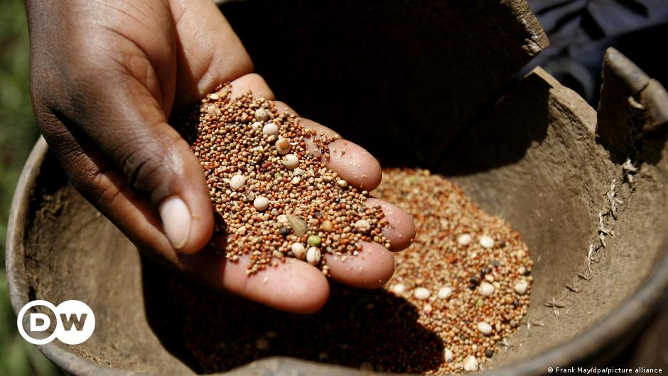 Seed monopolies: Who controls the world's food supply?