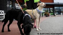 Finnland Corona-Pandemie | Corona-Spürrhunde