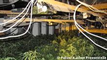 Deutschland | Cannabis-Plantage und Waffen bei Durchsuchung in Euskirchen entdeckt