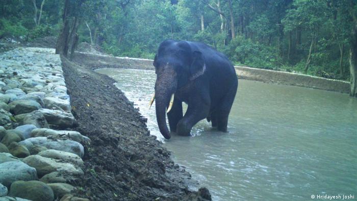 Indien | Nandhaur Wildlife Sanctuary in Uttarakhand