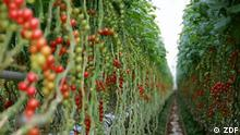 Bilder Dokus KW48 |High-Tech-Farmen für die Zukunft