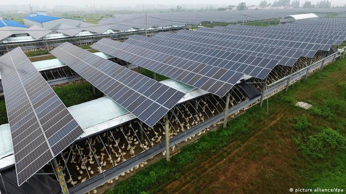 Photovoltaik in der Landwirtschaft: Oben Photovoltaikmodule und unten eine Geflügelfarm