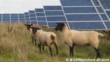 Deutschland I Fotovoltaikanlage Ensheim