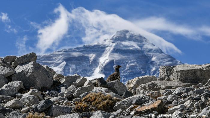 Mount Everest | Gipfel