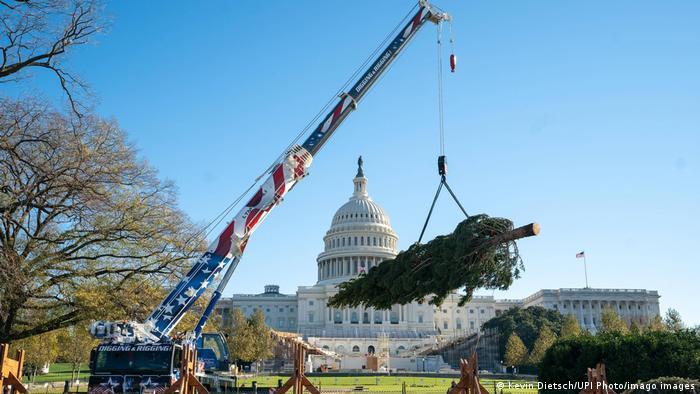 Čuveni zapadni travnjak pred zgradom Kapitola, sedišta dvodomog parlamenta u Vašingtonu, i ove godine biće ukrašen povećim božićnim drvetom. Četinari se pažljivo biraju uvek iz različitih šuma širom Sjedinjenih Država. Ovo je Engelmanova smreka, drvo tipično za Severnu Ameriku, a posečena je u Koloradu. Svetla će biti svečano uključena početkom decembra i drvo će ostati tu do Nove godine.