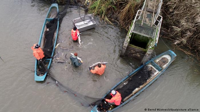 Рыбное хозяйство Мюриц-Плау