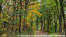 Herbst Niederlande