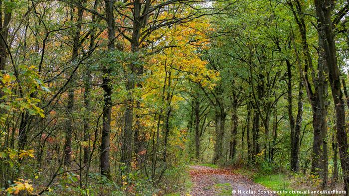 Path and trail in the forest with the leaves falling on the ground in the province of Limburg in the Netherlands,