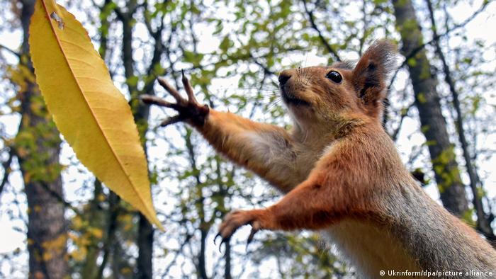 BdTD | Ukraine | springendes Eichhörnchen