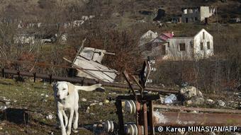 собака на фоне одного из сел, оставленных армянами в Карабахе