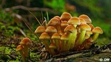 DW Eco India - Fungi, Pilze