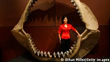 USA Las Vegas 2009 |Enya Kim & Skelett von Tyrannosaurus Rex