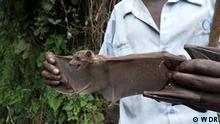 Doku KW49 | Von Covid bis Klima - Können Afrikas Wälder der Welt helfen?