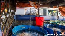 Bangladesch   Fischmarkt von Chittagong Fishery Ghat'
