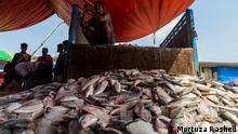 Bangladesch | Fischmarkt von Chittagong Fishery Ghat'