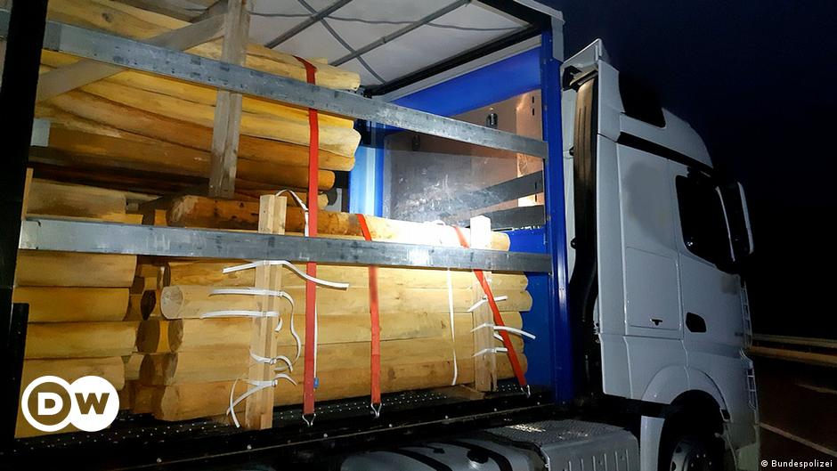 Germany: Migrants smuggled between tree trunks on truck