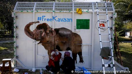 A crate to transport Kavaan the elephant to Cambodia