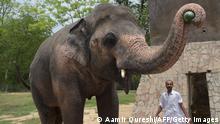 Pakistan Islamabad Elefant Kaavan