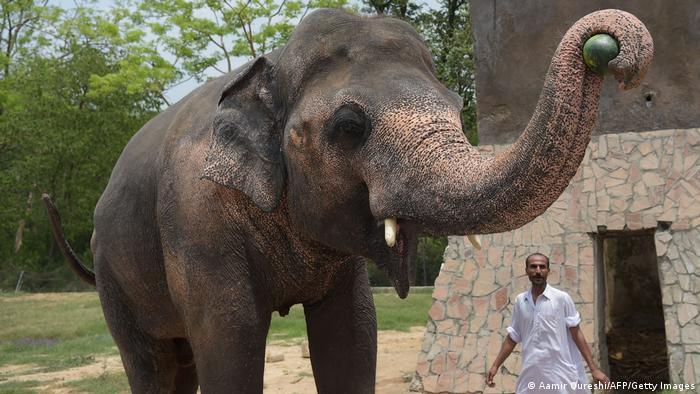 این فیل که تنهاترین فیل جهان لقب گرفته کاووان نام دارد. او سالها تنها در باغ وحشی در پاکستان نگهداری میشد و به علت تنهایی دائمی دچار افسردگی شده بود. سرانجام با جمعآوری ۴۰۰ هزار دلار امکان انتقال این فیل به کامبوج به یک مرکز نگهداری فیلها فراهم شد. شر خواننده معروف آمریکایی نیز با کمکی سخاوتمندانه امکان سفر کاووان را تسهیل کرد.
