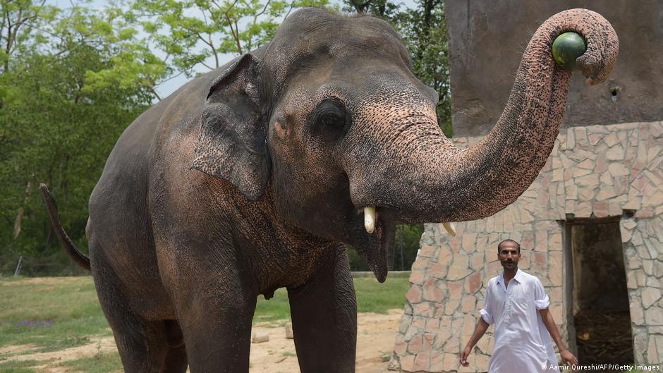 """""""Einsamster Elefant der Welt"""" in Kambodscha eingetroffen"""