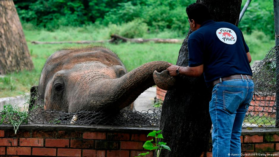 'World's loneliest elephant' Kaavan leaves Pakistan for Cambodia