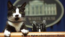 Katze sitzt am Pult des Presseraums im Weißen Haus.