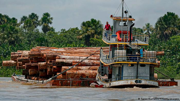 Desmatamento na Amazônia: grupo quer tema presente na política americana
