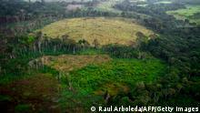 Abholzung des Amazonas