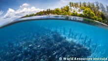 Ozeane als Schlüssel zur Lösung der Klimakrise