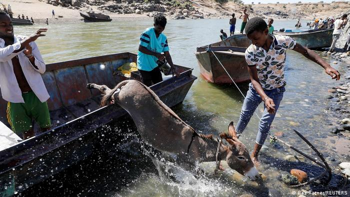 A donkey jumps off a boat after crossing a river from Ethiopia to Sudan